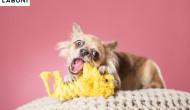 Spielzeug statt Zahnbürste – LABONIs Zahnpflege-Toys für Hunde