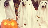 Kostümtrend 2019: Witzige Hundekostüme für Vierbeiner